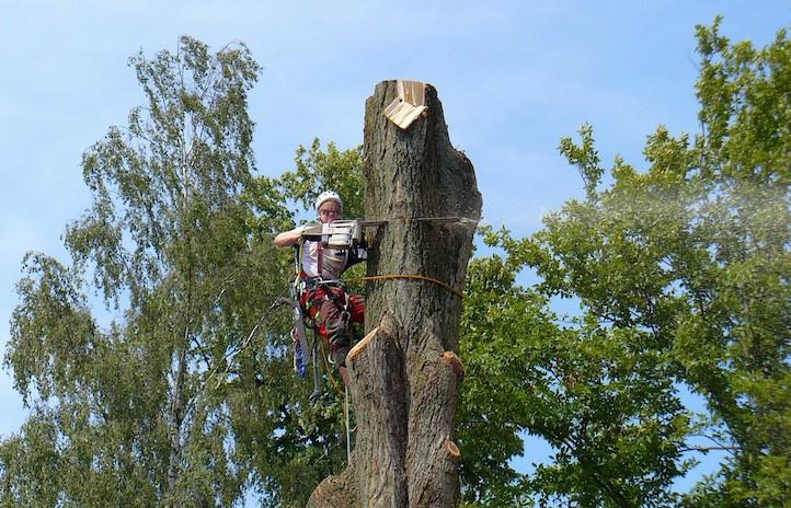 Andre Bischof Seilkletterer Baumfällung