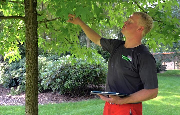 Andre Bischof Seilkletterer Baumkontrolle