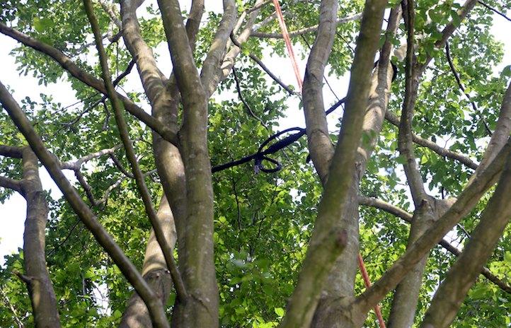 Andre Bischof Seilkletterer Baumsanierung