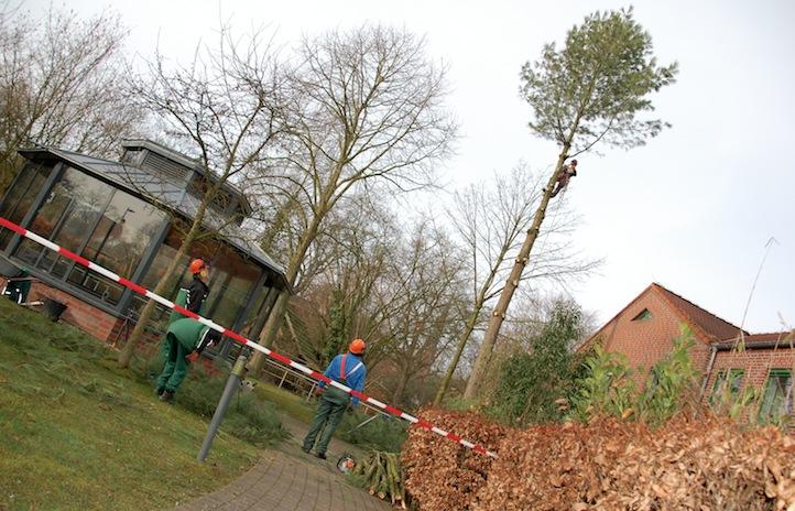 Baumfällung mit einem Seilkletterer