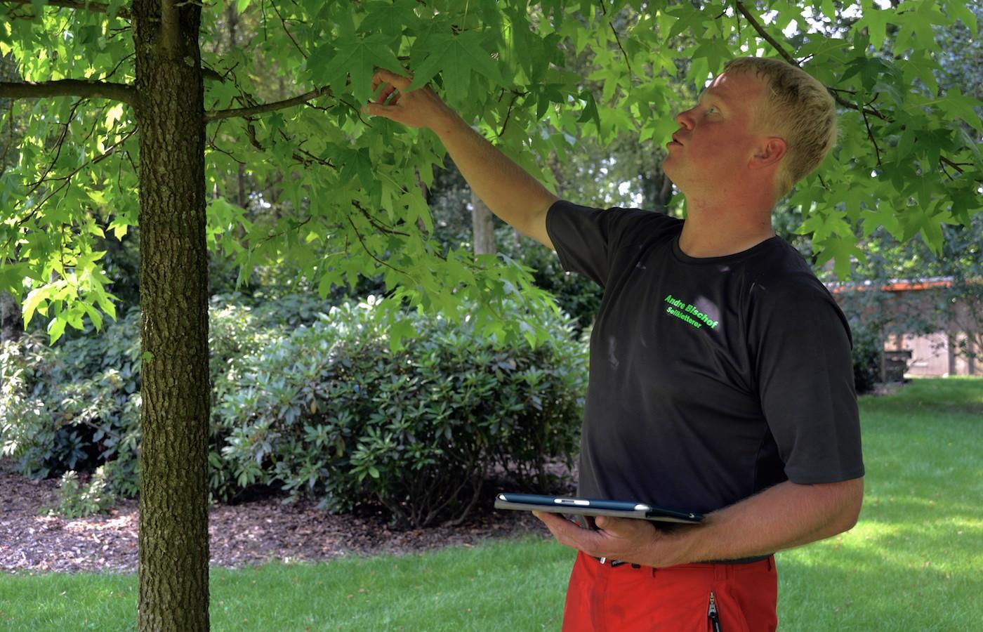 Baumkontrolle und Baumuntersuchung