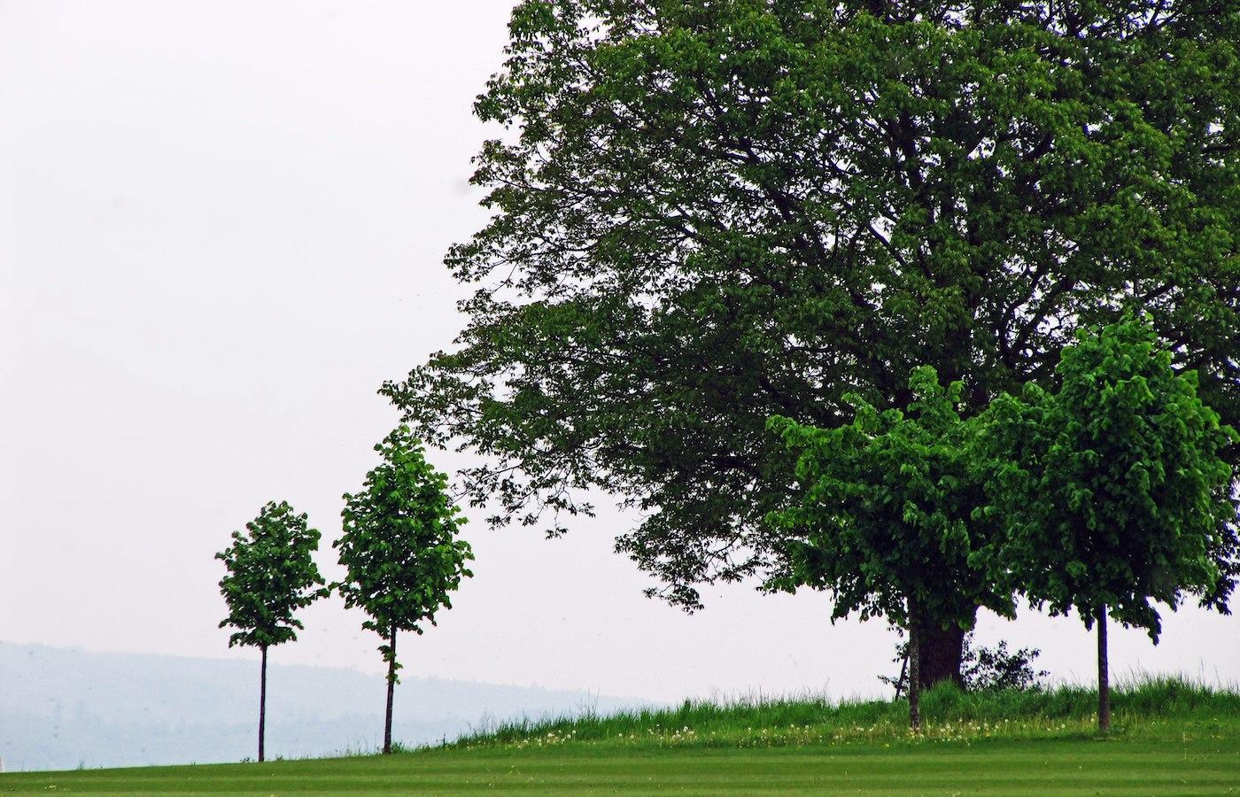 Andre Bischof Seilkletterer Baumpflanzung