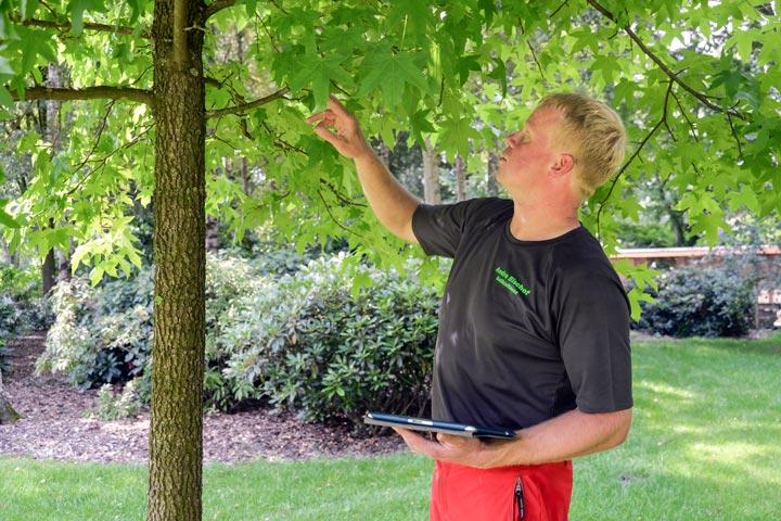 Baumkontrolle und -untersuchung
